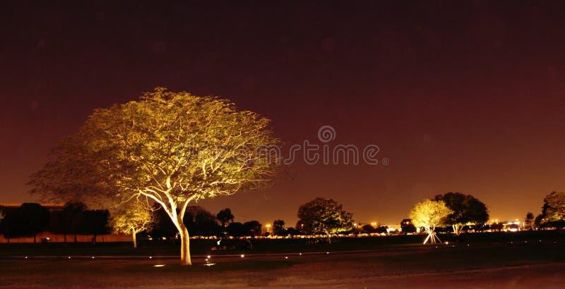 Aspiruje Ogrodowego Katar obraz stock