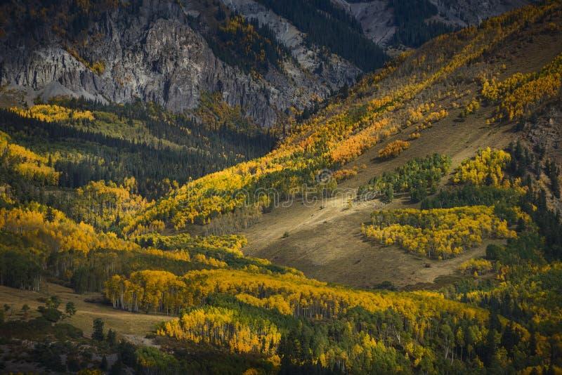 Aspskog nära den sista dollarvägen royaltyfri foto