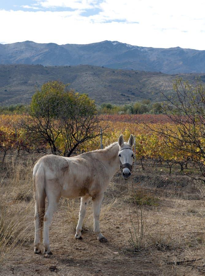 Download On slopes of Sierra Nevada stock photo. Image of sierra - 22033446