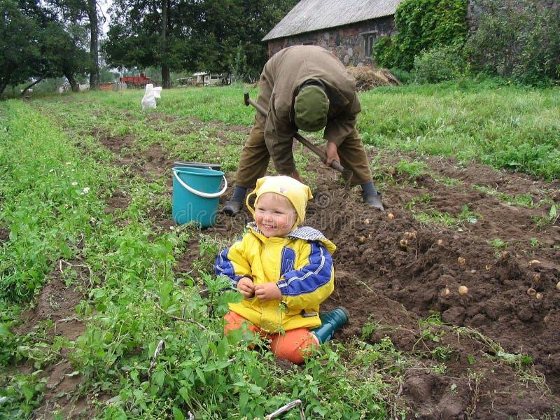 Assaisonnez quand des pommes de terre sont creusées à l'extérieur photographie stock libre de droits