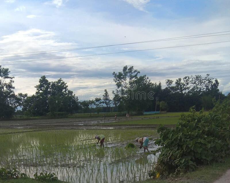 Assameseman/vrouwen Landbouwarbeider royalty-vrije stock fotografie