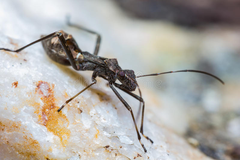 Download Assassin bug stock photo. Image of fauna, close, hunting - 26601414