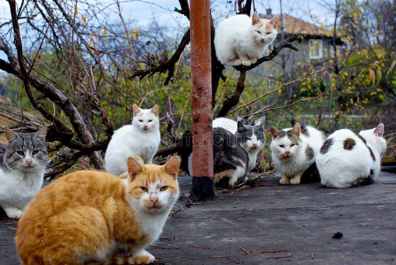 Assemblage van katten. royalty-vrije stock afbeelding