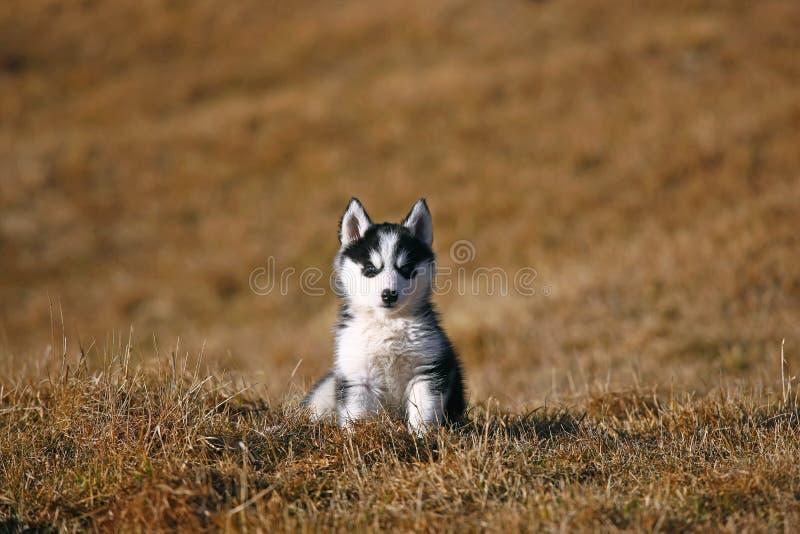 Assento bonito do cão de filhote de cachorro foto de stock royalty free