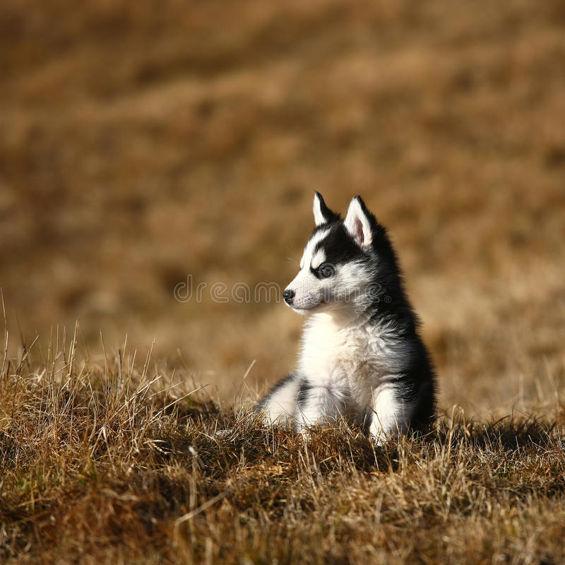 Assento bonito do cão de filhote de cachorro foto de stock