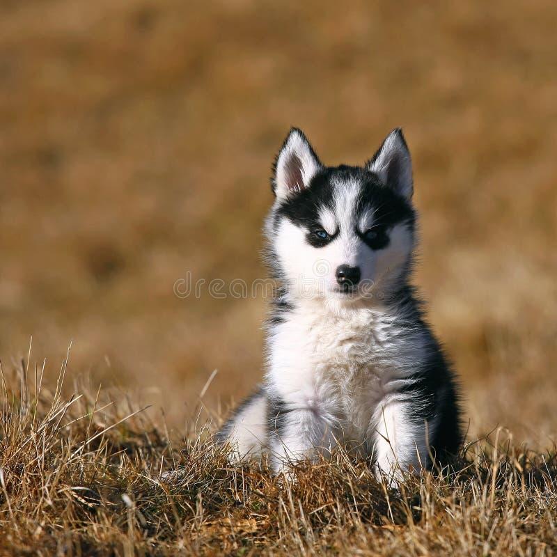 Assento bonito do cão de filhote de cachorro imagem de stock