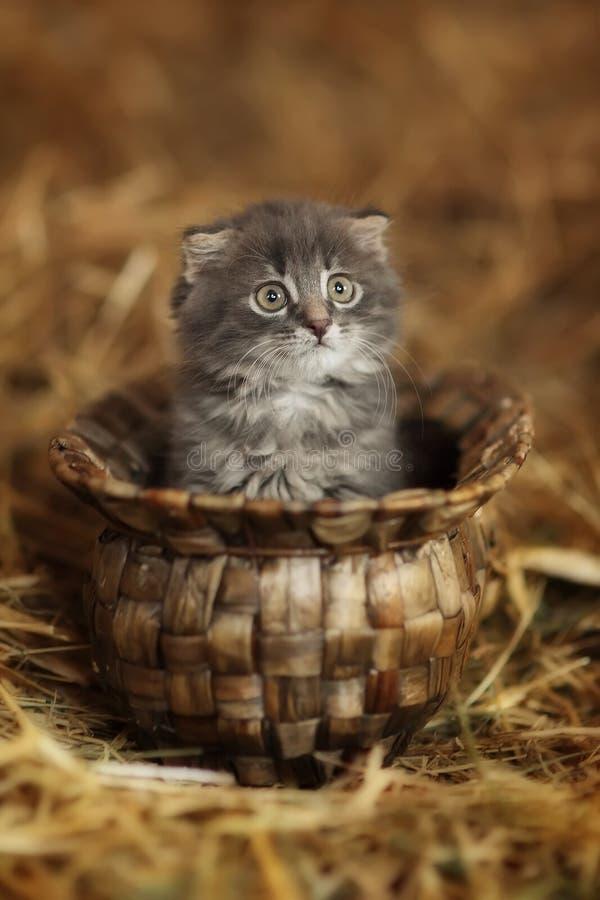 Assento cinzento pequeno do gatinho foto de stock royalty free