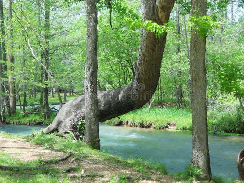 Assento da árvore fotografia de stock