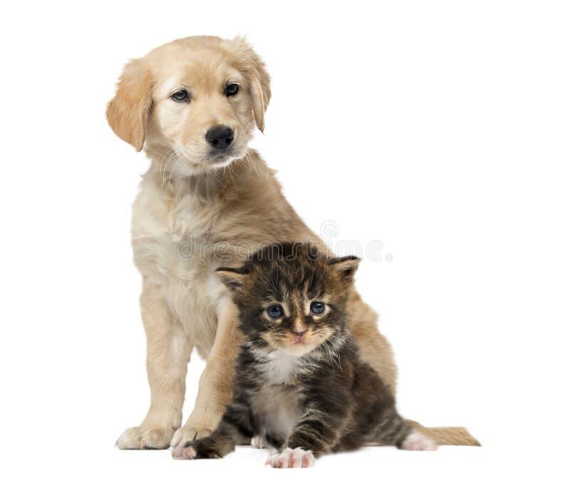 Assento do cão e gato, isolado fotos de stock royalty free
