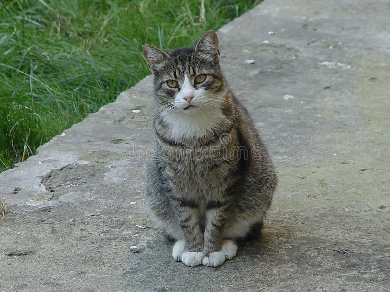 Assento do gato fotos de stock