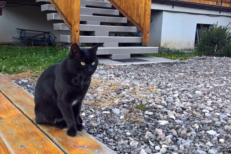 Assento do gato preto fotografia de stock royalty free