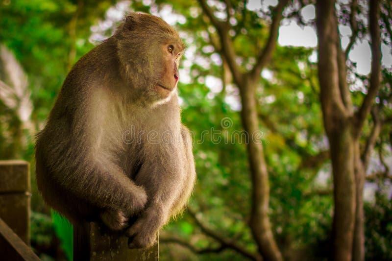 Assento do macaco imagens de stock