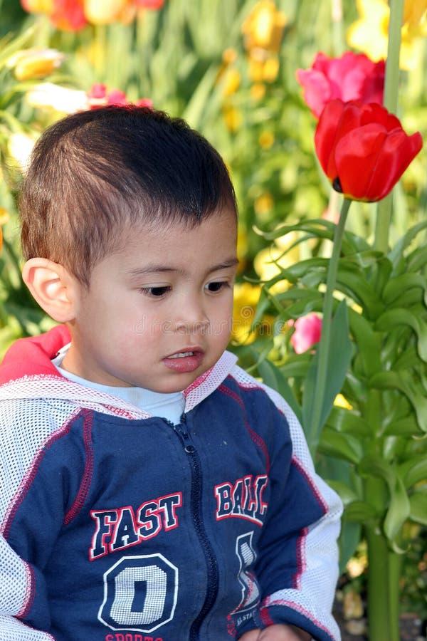 Assento no prado das flores fotos de stock