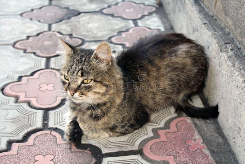 Assento pensativo do gato fotos de stock royalty free