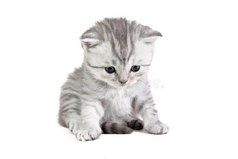 Assento pequeno do gatinho fotos de stock