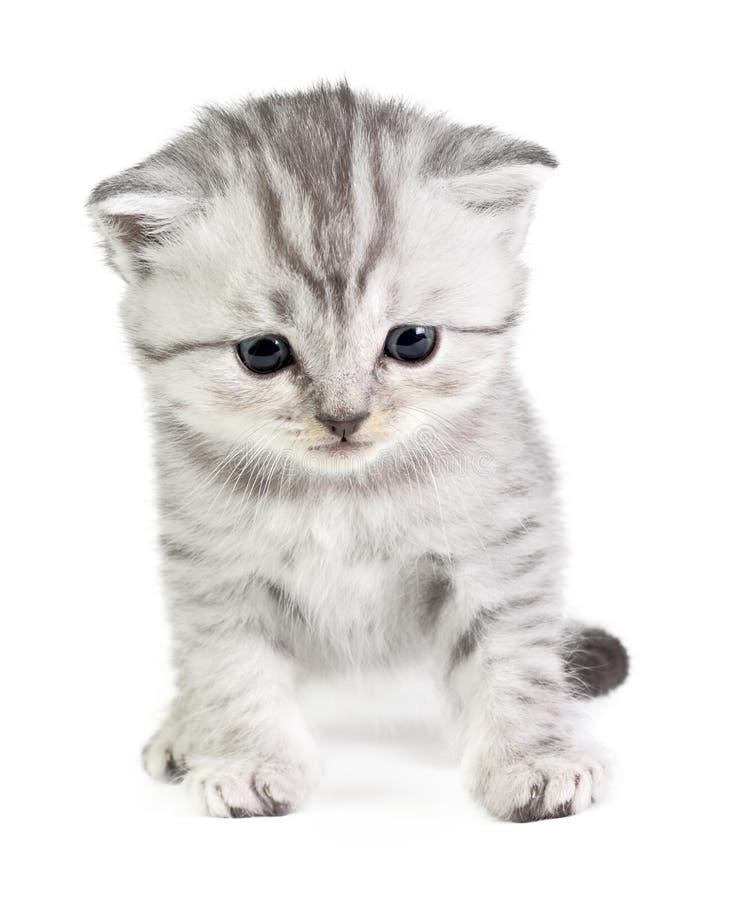 Assento pequeno do gatinho foto de stock royalty free