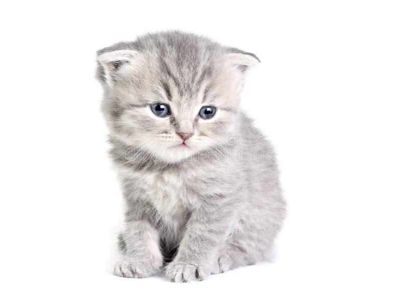Assento pequeno do gatinho foto de stock