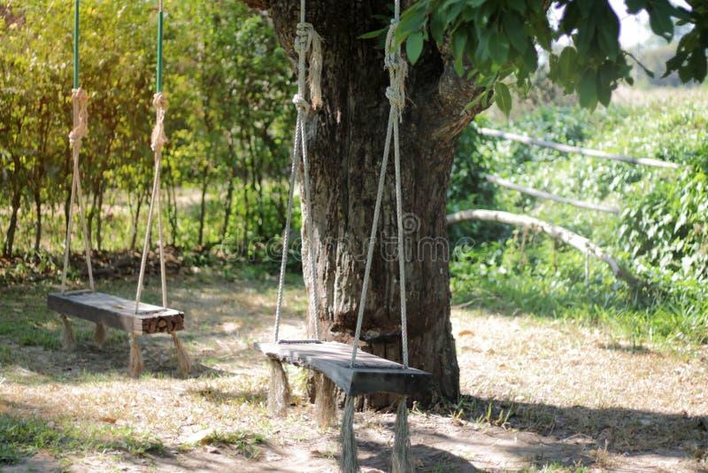 Assento sob uma árvore grande fotografia de stock