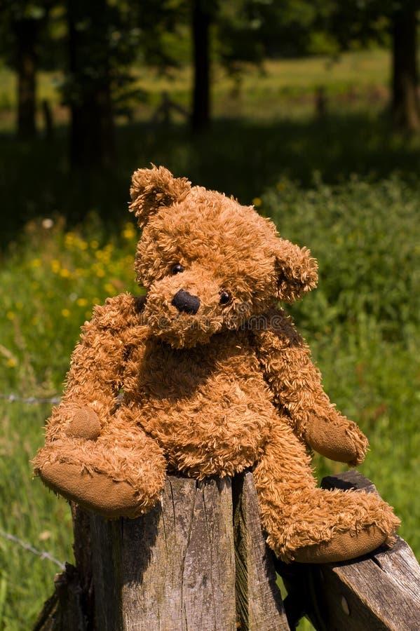 Assento teddybear muito bonito na cerca imagem de stock royalty free