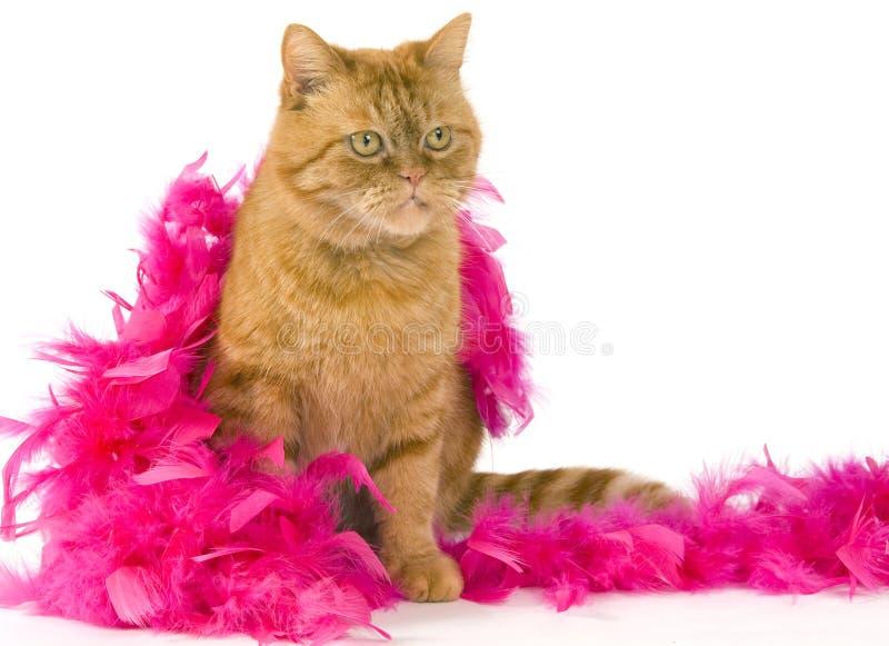 Assento vermelho doméstico do gato vestido acima imagem de stock