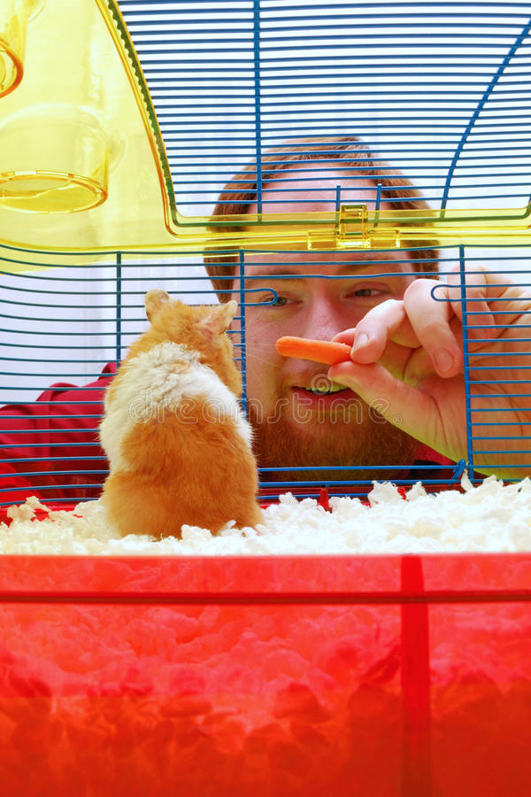 Assignment File: Hamster Looks at Man stock photography