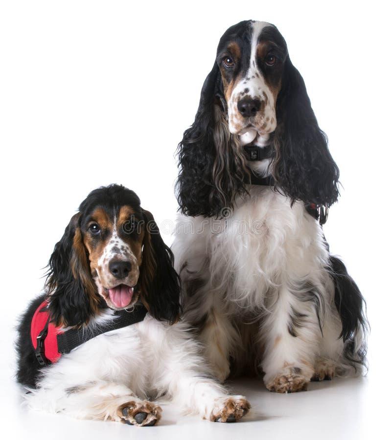 Assista i cani immagine stock libera da diritti