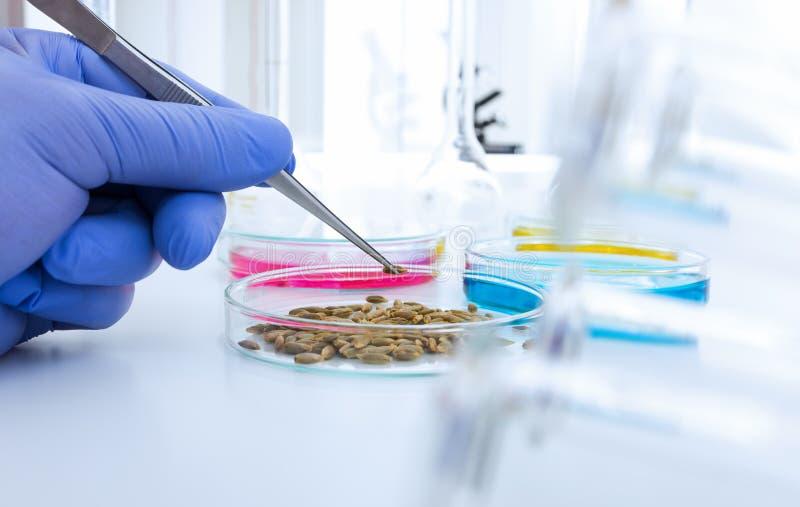 Assistant de laboratoire dans le laboratoire de la qualité des produits alimentaires Analyse de culture cellulaire pour examiner  images stock