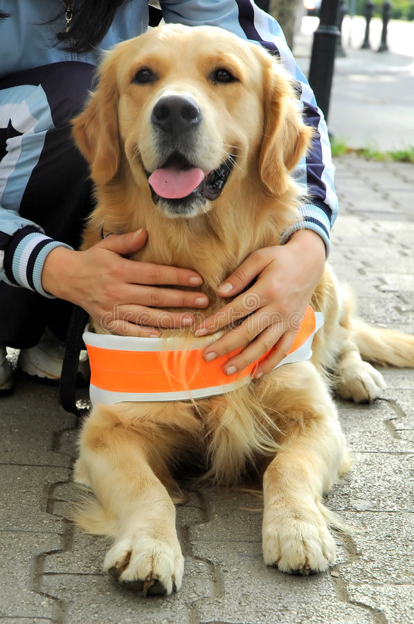 Free Assistant Dog For Blind People Stock Images - 1545364