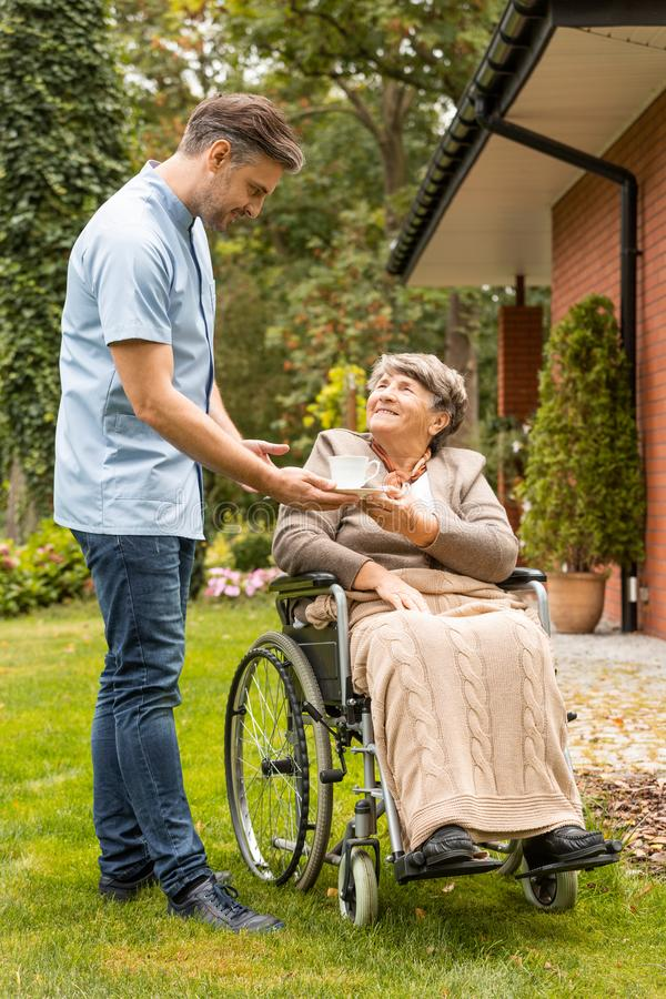 Assistant giving cup of tea to happy senior woman in the wheelchair in the garden stock photography