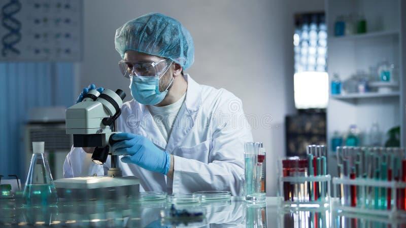 Assistente de laboratório que estuda amostras para detectar patologias, investigação médica da qualidade fotografia de stock