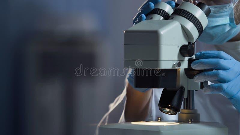 Assistente de laboratório que pesquisa as bactérias recentemente produzidas sob o microscópio, ciência fotografia de stock royalty free