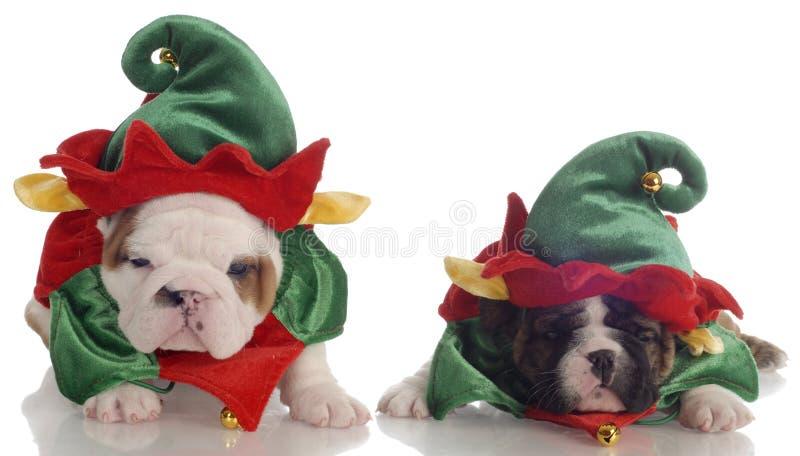 Assistenti dell'elfo della Santa immagine stock