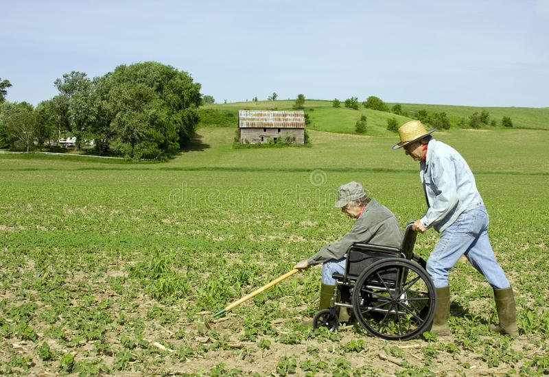 Assisting a friend. Elderly farmer assisting another disabled friend weeding a field stock photography