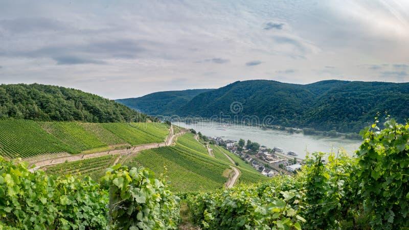 Assmanshausen am Rhein fotos de stock royalty free