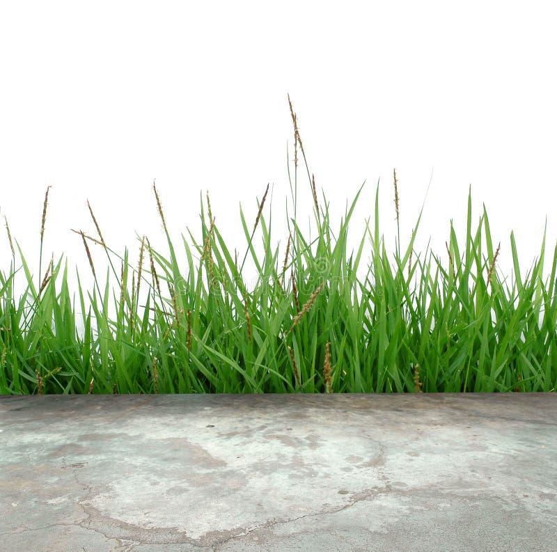 Assoalho concreto com grama verde fotografia de stock royalty free