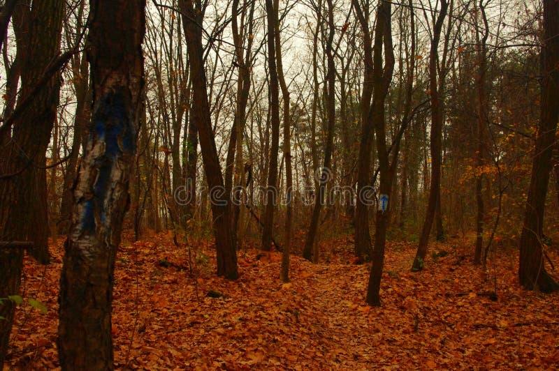 Assoalho da floresta atapetado com folhas imagem de stock