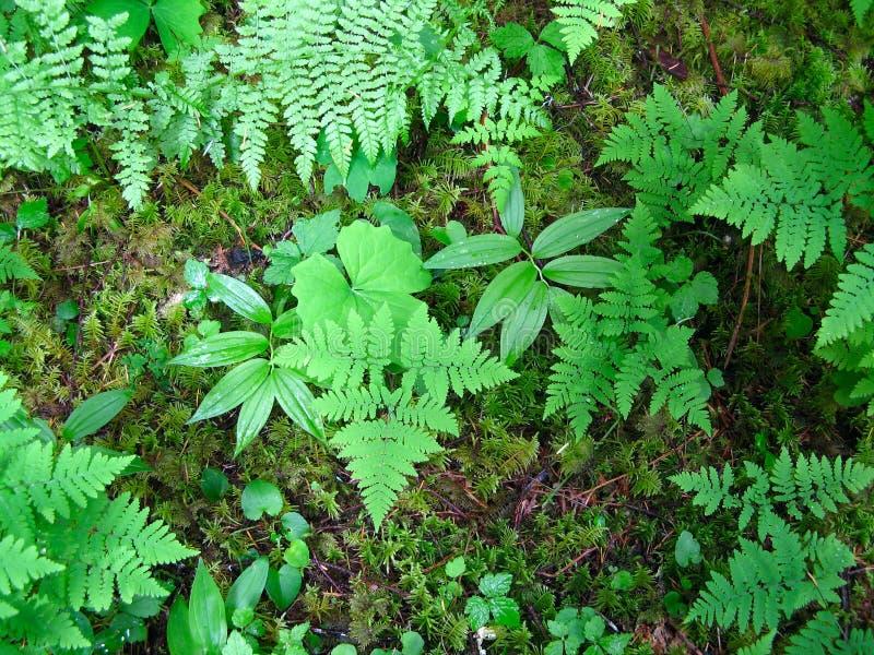 Assoalho da floresta tropical imagens de stock