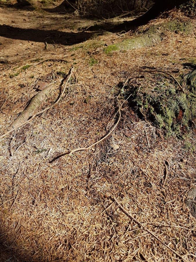 Assoalho de madeira na floresta foto de stock royalty free