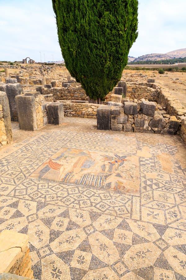 Assoalho de mosaico nas ruínas de Volubilis, cidade romana antiga em Marrocos imagem de stock
