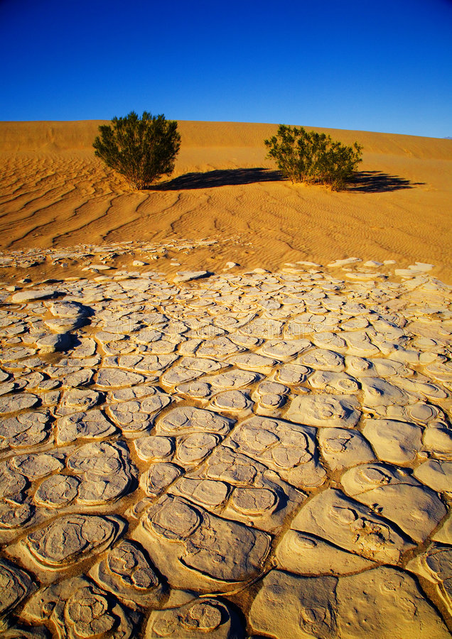 Assoalho do deserto imagem de stock
