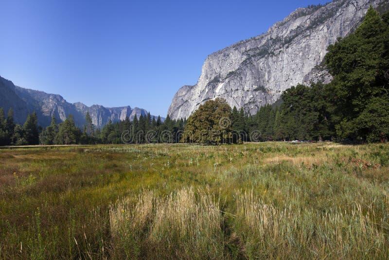 Assoalho do vale de Yosemite imagem de stock