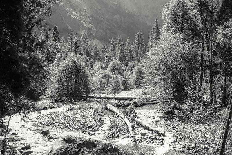 Assoalho do vale do parque nacional de Yosemite imagem de stock