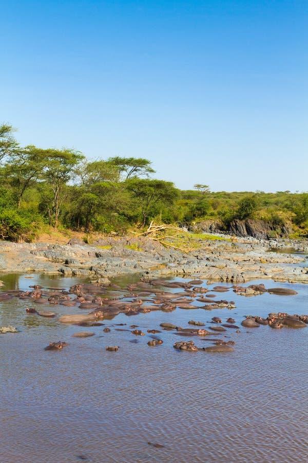 Associação da sopa no savana de Serengeti, Tanzânia fotos de stock
