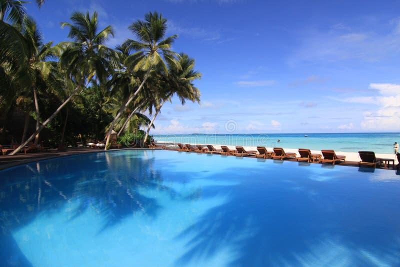 Associação de Inifinity e árvores de coco, Maldives fotografia de stock royalty free