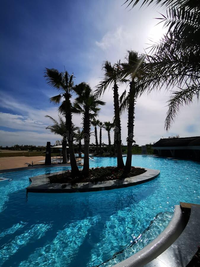Associação exterior com palmeiras tropicais imagem de stock
