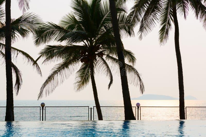 Associação, palmeiras, mar e por do sol foto de stock royalty free