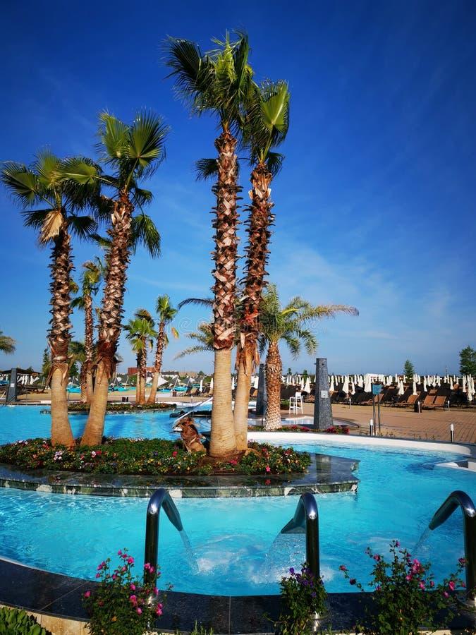 Associa??o exterior com palmeiras tropicais imagem de stock