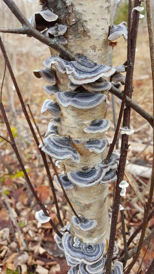 Association collective de champignon photo libre de droits
