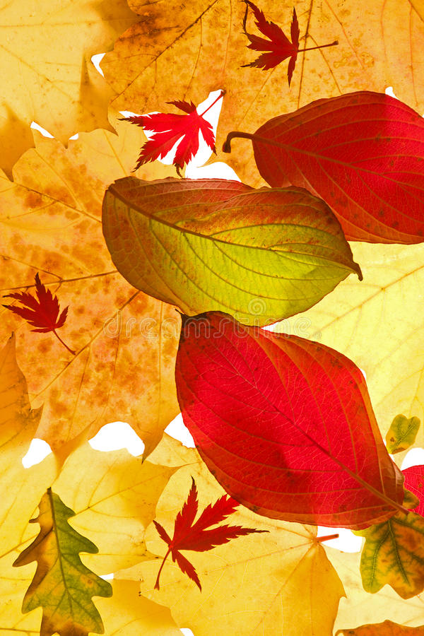 Download Assorted Autumn Leaves stock photo. Image of glowing - 27090670