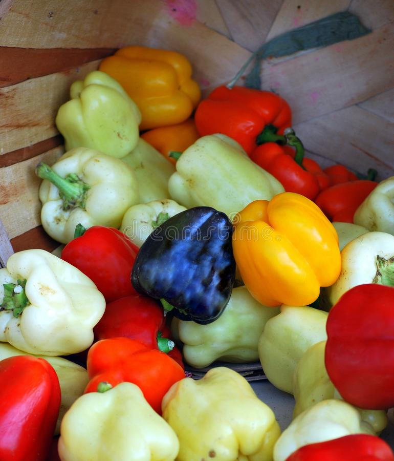 Assorted bell peppers. royalty free stock image